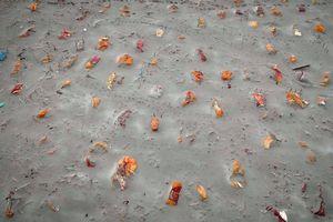 Thực tại trần trụi sau trận mưa làm trôi cát trên tử thi bên sông Hằng