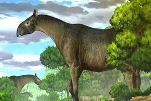 Phát hiện tê giác khổng lồ gấp 4 lần voi châu Phi