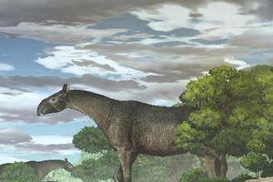 Phát hiện hóa thạch của tê giác siêu khổng lồ, lớn hơn cả voi ma mút ở Trung Quốc