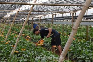 Thành lập Ban Chỉ đạo Chuyển đổi số trong lĩnh vực nông nghiệp