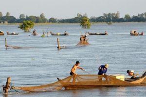Túi nước khổng lồ ở Tứ giác Long Xuyên
