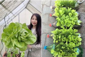 Vườn rau quanh năm tốt tươi với đủ loại rau quả của mẹ Việt