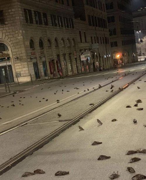 Kì lạ: 'Cơn mưa' xác chim xẩy ra trong đêm giao thừa tại Ý