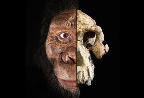 Lộ diện khuôn mặt tổ tiên lâu đời nhất của loài người