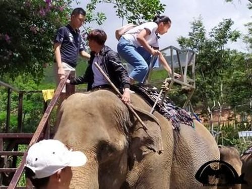 Du khách tố voi bị ngược đãi, bóc lột ở nhiều khu du lịch tại Đà Lạt
