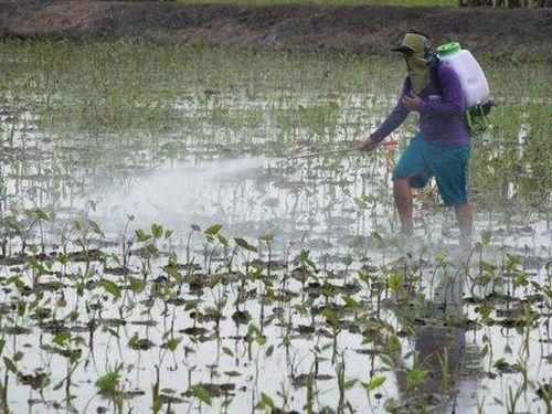 Thái Lan ngừng cấp phép hóa chất nông nghiệp nguy hiểm