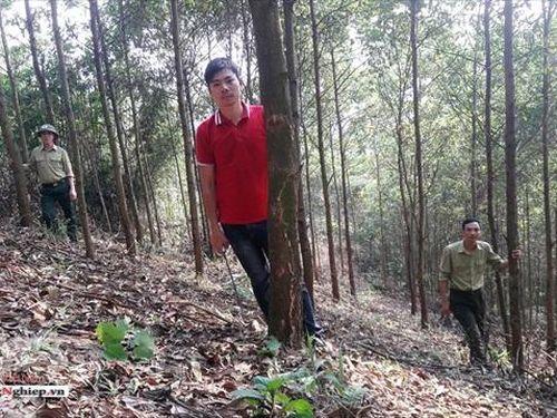 Thanh Hóa: Hỗ trợ trên 1 nghìn tấn gạo cho người trồng rừng