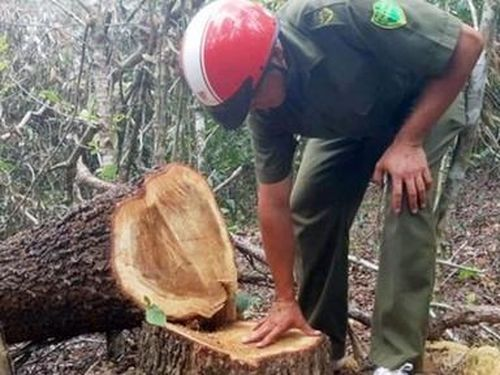 Bắt quả tang 4 đối tượng cưa trộm hơn 50m3 gỗ