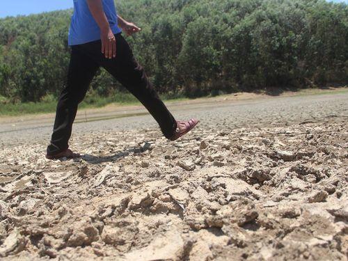 Hơn 1.000 ha lúa chết cháy giữa mùa mưa