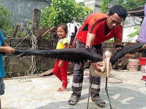 Hà Tĩnh: Thả chim lạ về rừng