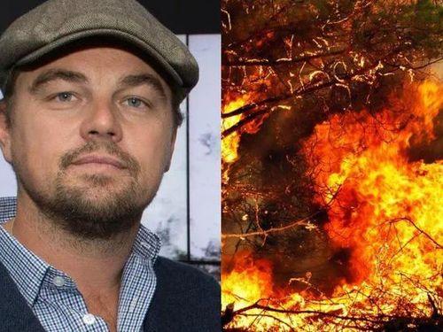 Leonardo DiCaprio hiến 5 triệu USD cứu rừng Amazon