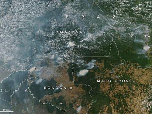 Ai 'nướng cháy' lá phổi xanh Amazon của Trái đất?