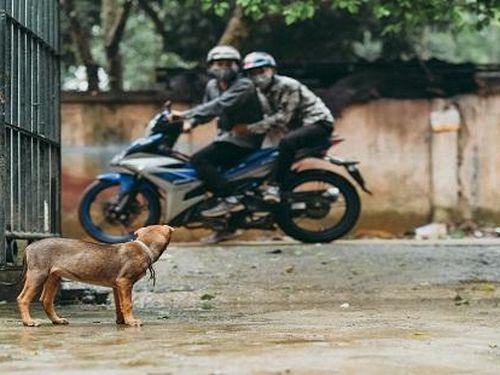 Đuổi theo hai đối tượng trộm chó, nam thanh niên bị bắn tử vong