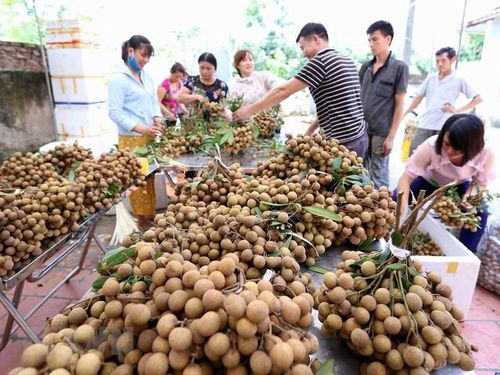 'Điểm danh' các loại trái cây Việt Nam đã được xuất ngoại