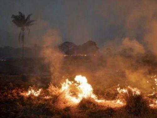Các quốc gia Nam Mỹ ký thỏa thuận bảo vệ rừng Amazon