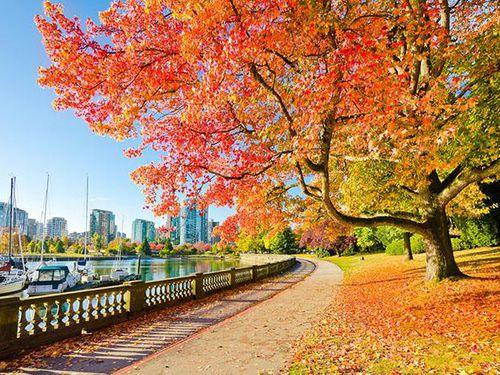Mùa thu ở xứ sở lá phong