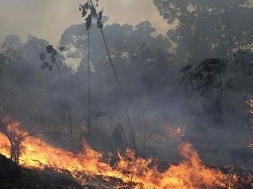 Thế giới đối mặt với nguy cơ ô nhiễm môi trường vì cháy rừng