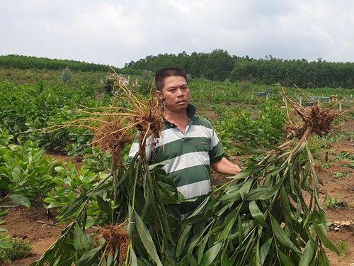 Chính quyền xã Tam Xuân 2 (Núi Thành - Quảng Nam) 'vô tư' triệt hạ hàng nghìn cây keo của dân: Xin lỗi, chúng tôi đã nhầm lẫn...!