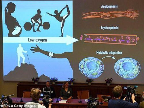 Cơ chế cảm biến oxy mở hướng mới về điều trị bệnh ung thư