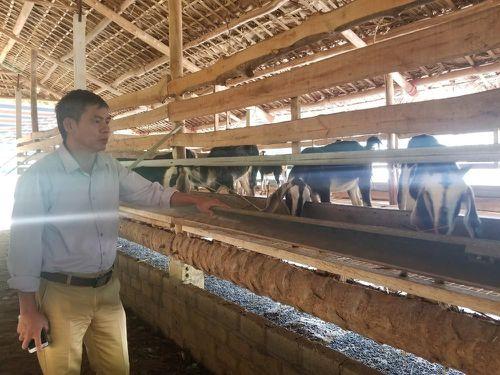 Chủ trang trại bất lực nhìn đàn dê chết thảm ngay giữa khu công nghiệp