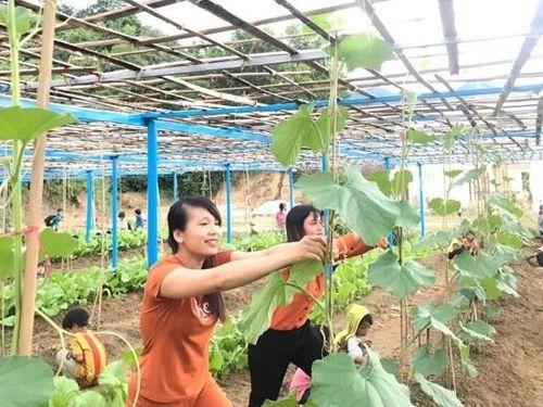 Xúc động hình ảnh thầy và trò vùng cao Quảng Nam xới đất, trồng rau cải thiện bữa ăn