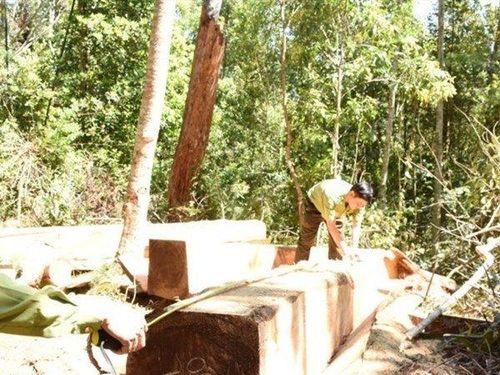 Phú Yên: Lâm tặc bỏ lại gỗ quý tháo chạy thoát thân