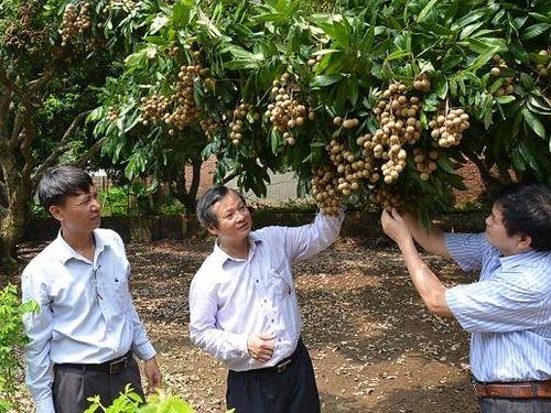 Nông sản Việt chinh phục thị trường Mỹ