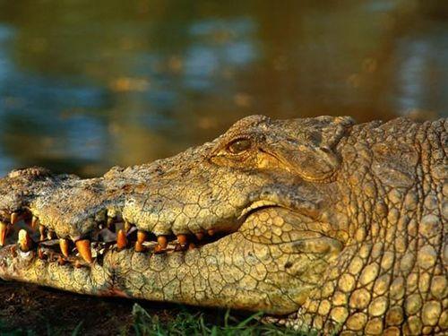 Bé gái 11 tuổi chọc vào mắt cá sấu để cứu bạn ở Zimbabwe