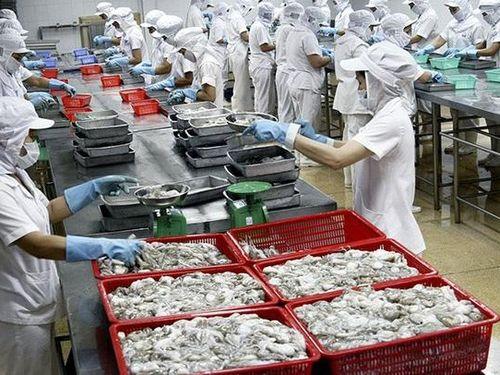 Tăng trưởng mạnh xuất khẩu mực, bạch tuộc Việt Nam sang Mỹ
