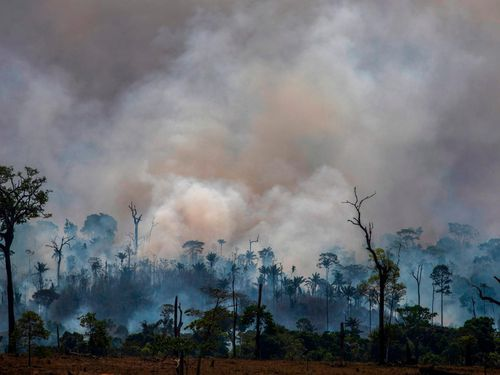 Tổng thống Brazil gọi nạn phá rừng Amazon là 'văn hóa'