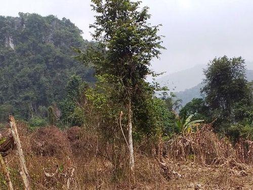 Vụ 'Lâm tặc' phá rừng phòng hộ bằng thuốc diệt cỏ ở Thanh Hóa: Chủ tịch huyện cảm ơn Báo Giáo dục và Thời đại