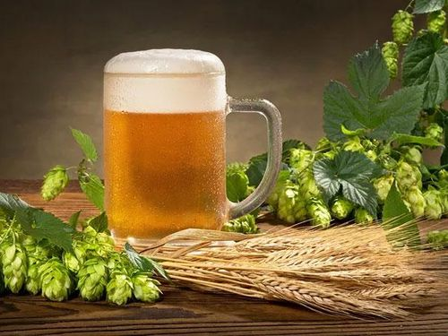 Phát hiện 'thần dược' đẩy lùi cao huyết áp, tiểu đường trong... bia