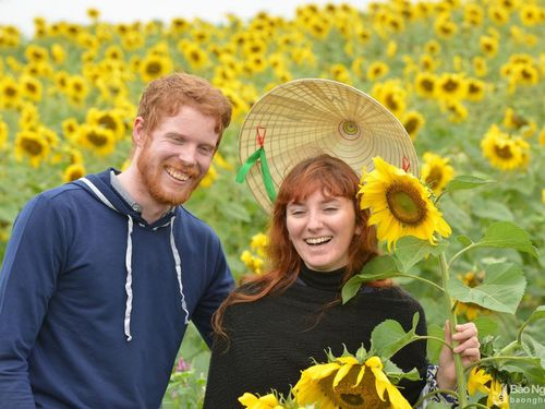 Du khách nước ngoài mê mẩn với cánh đồng hoa hướng dương Nghệ An