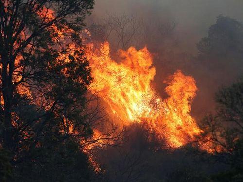 Thảm họa cháy rừng Australia: Thêm một lính cứu hỏa thiệt mạng