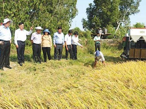 Đồng chí Phạm Văn Hiểu kiểm tra công tác giao thôngthủy lợi và sản xuất nông nghiệp tại huyện Thới Lai