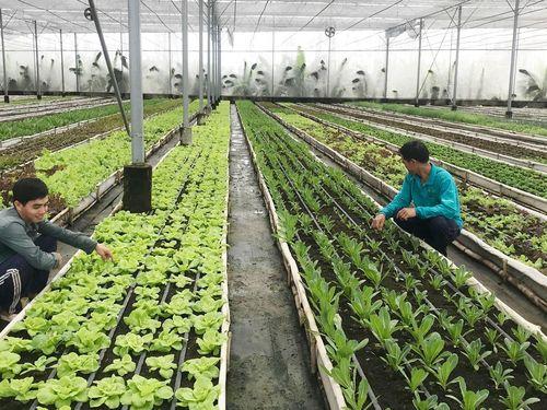 Công nghệ góp phần đạt chuẩn sản phẩm hữu cơ