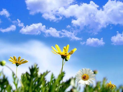 Bạn với trời xanh