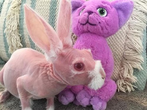 Chú thỏ không lông kỳ dị hay câu chuyện cảm động về những tấm lòng cao cả