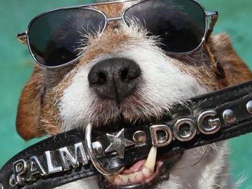 Chết hơn 5 năm, chó Uggie vẫn thắng giải thưởng diễn xuất