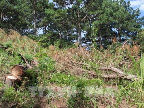 Áp lực giữ rừng ở Tây Nguyên: Bài 3 - Nhiều thách thức trong giữ rừng tự nhiên