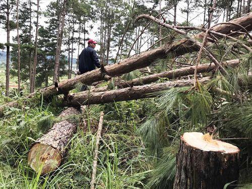 'Bốc hơi' hơn 500 ha rừng ở Lâm Đồng: Chuyển hồ sơ sang công an