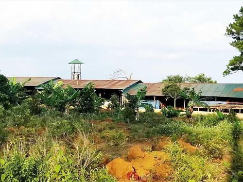 200 ha rừng ở Lâm Đồng bị phá nát, ai tiếp tay?
