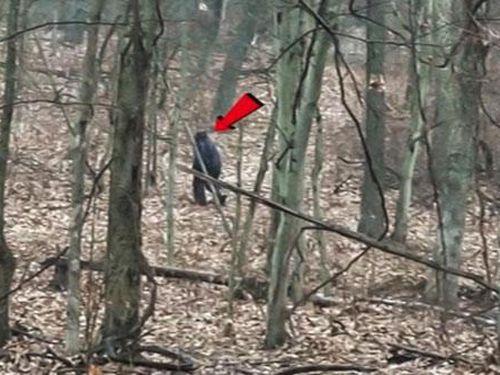 Hai du khách theo dấu quái vật chân to Bigfoot trong công viên