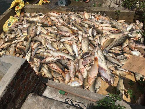 Vụ cá chết hàng loạt ở Hải Dương: Phục hồi điều tra vụ án