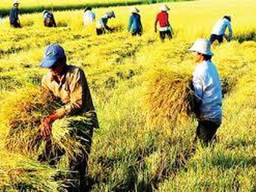 Phân tích tình hình thực hiện tái cơ cấu ngành nông nghiệp tỉnh bến tre theo hướng nâng cao giá trị gia tăng và phát triển bền vững