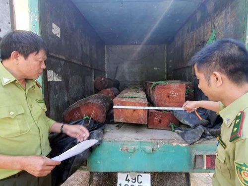 Xử lý nghiêm vụ xe tải chở gỗ lậu tông xe lực lượng kiểm lâm
