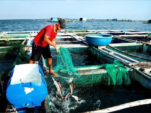 Về Ninh Thuận ra làng bè Đông Hải xem tắm cá