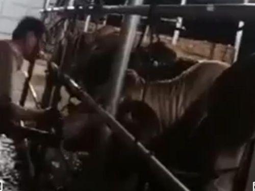 Sớm xử lý cơ sở giết mổ động vật trái phép