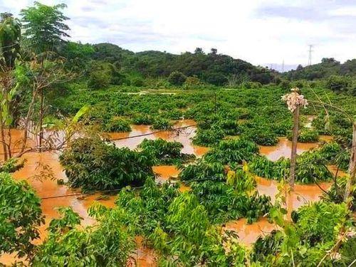 Tây Nguyên: Mưa lũ cuốn trôi người, nhấn chìm cầu và hàng trăm ha cây trồng