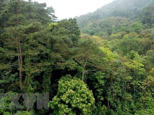 Thập kỷ bảo tồn đa dạng sinh học - Việt Nam đã làm gì?